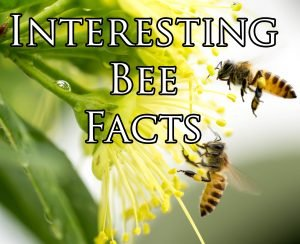 interesting bee facts
