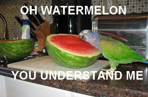 oh watermelon 128904