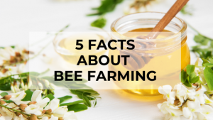 5 facts about bee farming 1